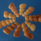 Cut Shells Turritella terebra 04-020402