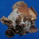 B789-34730 Seashell Xenophora pallidula