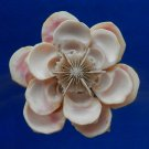 B560 cut shells Sailors Valentine Craft shells- Drupa morum-05, 1 oz.