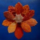 B693 Cut shells- Mimachlamys sanguinea-56, 12 pcs.