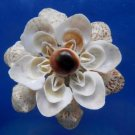 B556 Craft shells Strombus variabilis-10, 1/2 oz.