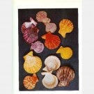 SEASHELL SEA SHELL COLOR PRINTS Lot 70 THE SHELL Hugh Margeurite Stix R T Abbott H Landshoff