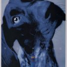 Skyy vodka '90s PRINT AD blue hound dog alcohol advertisement 1997