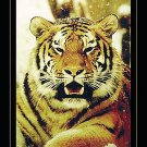 NEW TIGER -  24 X 36 ANIMAL POSTER