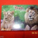 516 FL BUSCH GARDENS TAMPA LION REFRIGERATOR MAGNET