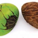 Tagua Nuts from the Amazon Basin - Free Shipping!!