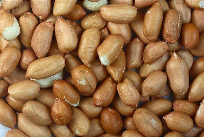 Peanut / Maní