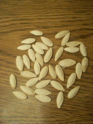 Mexican Pumpkin calabaza untreated seeds