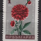 Bulgaria 1966 - Scott 1556  used -  1s, flowers, Dahlia   (7-486)