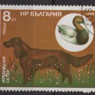Bulgaria 1985 - Scott  3129  used -  8s, Hunting dog (8-53)