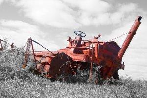 Big Red Massey Harris Combine on the Prairie 5x7 Photo