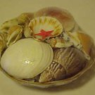 BRAND NEW BASKET OF SEASHELLS GREAT FOR CRAFTS SCHOOL COLLECTING AQUARIUMS MORE