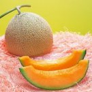 MELON SEEDS (YUBARI KING MELON) 30 FRESH SEEDS