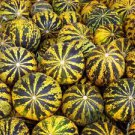 ANATOLIAN HEIRLOOM DALAMAN 50 FRESH MELON SEEDS