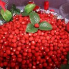 WILD  ANATOLIAN  MOUNTAIN  STRAWBERRY  50 FRESH SEEDS