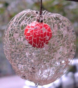Physalis alkekengi - Chinese Lantern Plant (Bladder Cherry) 30 Fresh Seeds