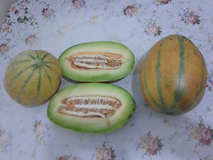 PAMUKOVA MELON 30 FRESH SEEDS
