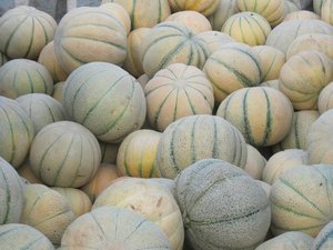PERSIAN MELON (TALIBI) 25 FRESH SEEDS