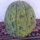 AKHISAR GREEN WINTER MELON 30 FRESH SEEDS