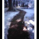 A4 Framed Landscape Print - Spiritual Path