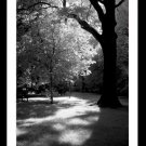 A4 Framed Landscape Print - An Afternoon In The Park