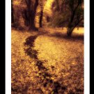 A4 Framed Landscape Print - Autumn Pathway