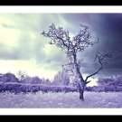 A4 Framed Landscape Print - Lone Tree In Infrared