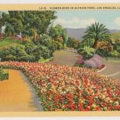 Flower Beds in Elysian Park-Los Angeles California