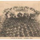 Cactus in Bloom-Tucson Arizona