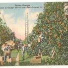 Scene in Orange Grove-New Orleans Louisiana