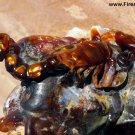 Fire Agate Gemstone Scorpion Carving by Ryszard Krukowski Gem Display SLC001