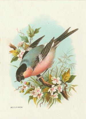 Bullfinch Bird with Flowers Cotton Fabric Panel 4x5 Inch