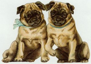 4 x 5 1/2 Victorian Pug Puppy Dogs Cotton Fabric Panel
