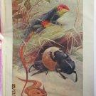 Lizard, Beetle, Horned Viper, Antique Print, 1907
