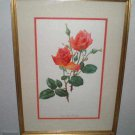 Montezuma roses Bios by Marie Trechslin Print