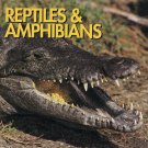 Reptiles & Amphibians By Joanne Mattern Softcover Book