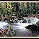 Vintage Postcard Mountain Stream in Autumn Grandfather Mountain Linville North Carolina