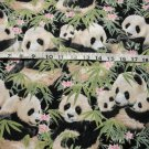 ADORABLE PANDA BEARS ON BAMBOO SHOOTS-ELIZABETH STUDIOS-BTY-QUILTING-SEWING