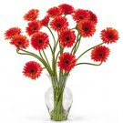 Gerber Daisy Liquid Illusion Orange