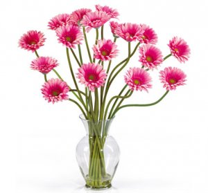 Gerber Daisy Liquid Illusion Pink