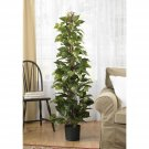 """Nearly Natural Artificial Potted 63"""" Pothos Climbing Silk Plant   Home Decor"""