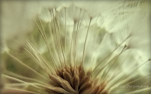 FLOWER - canvas floral photography