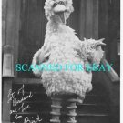 SESAME STREET 8x10 PHOTO OF BIG BIRD AUTOGRAPHED FASCIMILE 1981