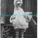 SESAME STREET PHOTO OF BIG BIRD SIGNED FASCIMILE 1981