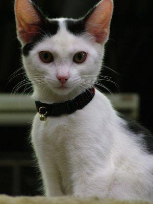 KNC KittyWear Beaded Crochet Cat Collar Heartbeats