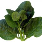 Vegetable seeds malabar spinach,CeylonGreen Vine,Basella alba ( Mong Toi ) 100 seeds