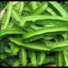 (20+) Winged bean, Four Angled bean, Manila bean,Đậu rồng seeds