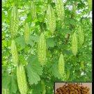 (15) Bitter Melon ,Bitter Gourd seeds, Balsam Pear, Ku Gua, Foo Gwah,(kho qua)