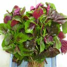 Asian Chinese Greens Spinach vegetable,  EDIBLE RED AMARANTH : 6000 seeds (5g)