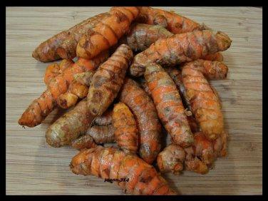 California  Fresh Herb Turmeric (Curcuma Longa) root, Bulbs Rhizomes .